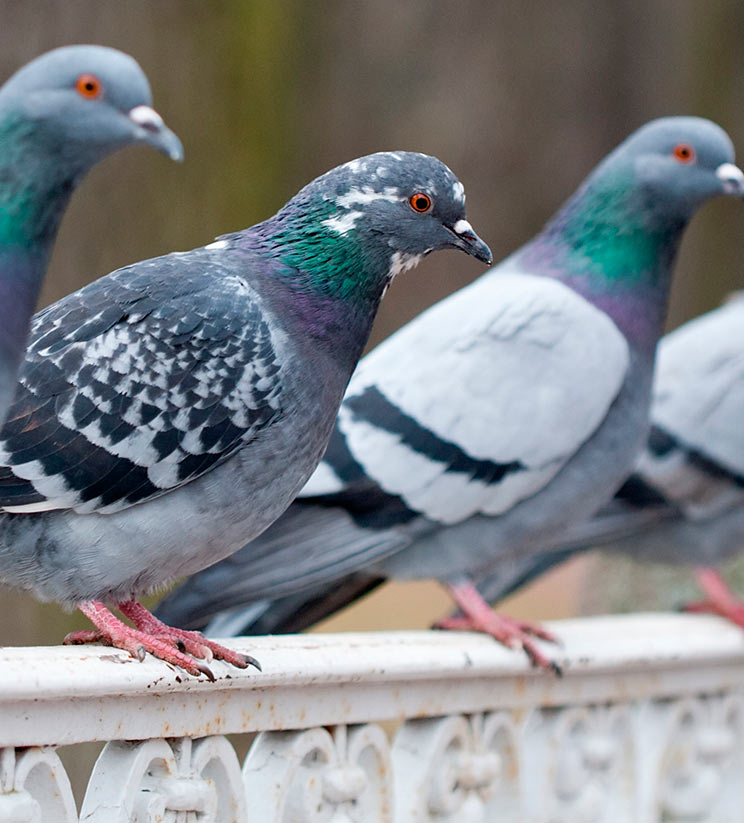 Servicios de Control de Fauna