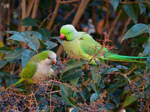 Control Aves Urbanas